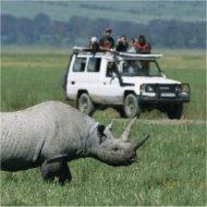 safari jeep, kenya
