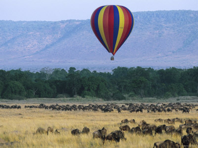 hot air balloon safari, during wildebeest migration, masai mara national reserve, kenya