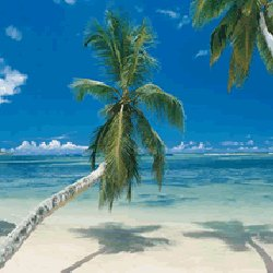 sunny kenya beach