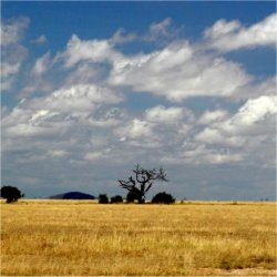 landscape in kenya, africa