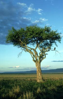 landscape eagle kenya