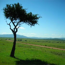 landscape of masai mara national reserve, kenya