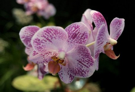 tropical orchid from kenya