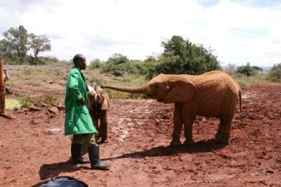 the DSWT