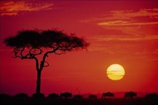 wildebeest migration, sunset, masai mara, kenya