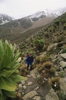 woman hiking up mount kenya
