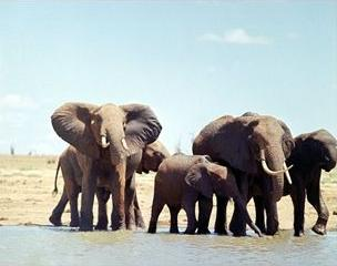 Elephants at Tsavo East National Park, Kenya