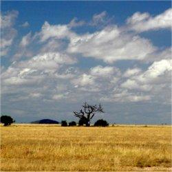 landscape in kenya, africa