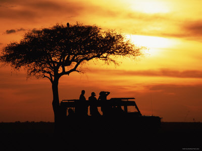 sunset masai mara, acacia tree, jeep